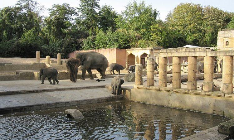 Zoo Hannover Elefanten